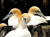 עופות ים 2