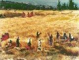 תמונות מישראל