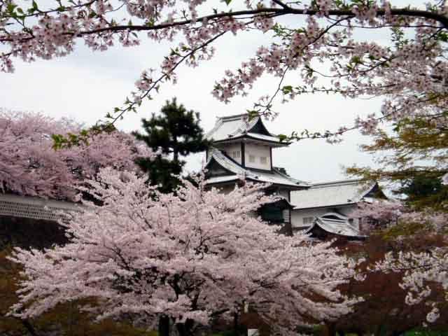 Sakura in Kanazawa, Japan