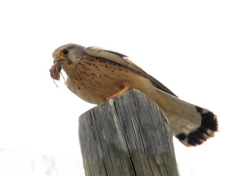 סיפורי ציפורים