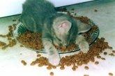 תנוחות במיטה של בעלי חיים