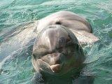 דולפינים באילת