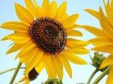 פרחים יפים בארץ ישראל