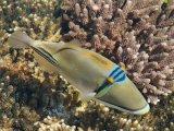 עם דגים בים סוף