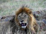 הטורפים של הסוואנה, טנזניה