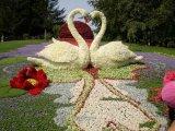 Flower Show in Kiev