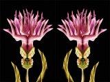 Human - Like Flowers