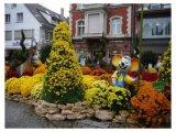 פסטיבל חרציות בגרמניה