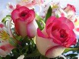 שושנים - Roses