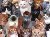 שוב חתולים, הפעם ללא כלבים