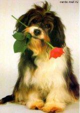 מזל של כלב