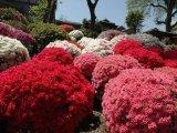 גני  פרחים  ביפן