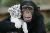 Friendship Between Animals is Possible
