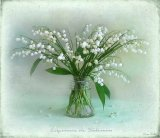 זרים של פרחים