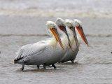 ציפורים מהמזרח הרחוק