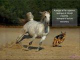 מצגת לחובבי סוסים