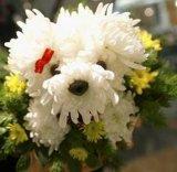 בובות מפרחים