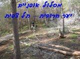 מסלול אופניים יער חרובית -תל צפית
