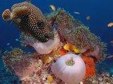 תמונות תת מימיות ממפרץ אילת