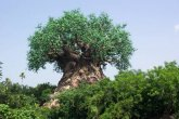 עץ מלאכותי מופלא באמריקן דיסנילנד