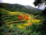 סין בזמן העבודה