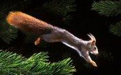 תמונות של חיות בתנועה