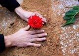 פרחים בצער ובשמחה