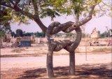 כל מיני צורות של עצים