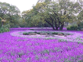 Ashikaga Flower Park in Japan