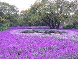Ashikaga Flower Park in Japan
