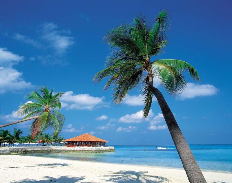 The Caribbean Region