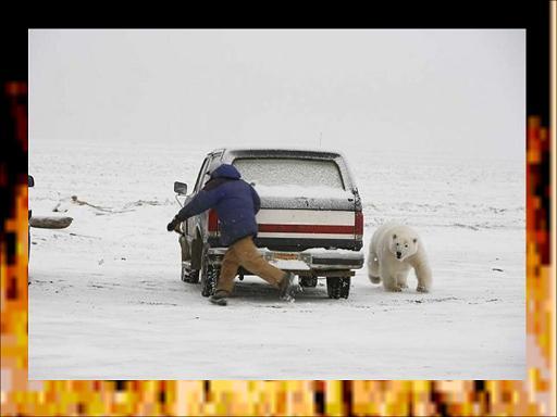 תמונות משעשעות  - חיות נגד בני אדם