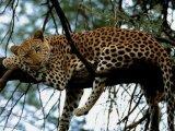 תמונות מאפריקה