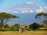 תמונות מקניה