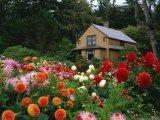 צבעים בטבע