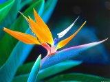פרחים - flowers