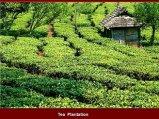 תה בסין