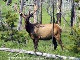 הפארק הלאומי ילוסטון