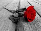 קצת על ורדים אדומים