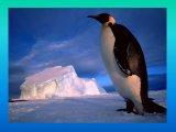 הפינגווינים הקיסריים