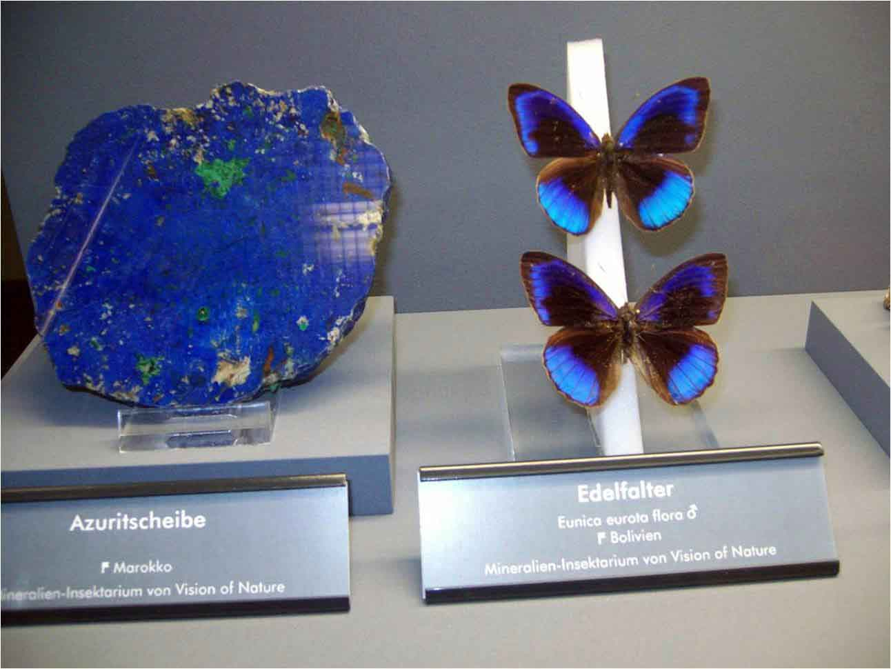 Butterflies with Gems