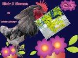 Flowers&Birds By Zvicka&Monique (2)