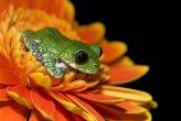 צפרדעים בצבעים מדהימים