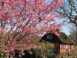 האביב כבר כאן