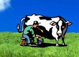 מהי הפרה שלך?