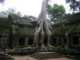 אנגקור - קמבודיה