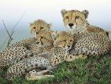 קניה - KENYA - מצגת מדהימה של בעלי חיים ונופים