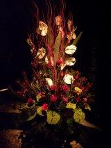 תערוכת פרחים חיפה 2012