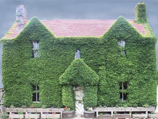 בתים מוזרים