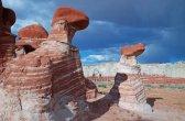 פטריות אבן באריזונה